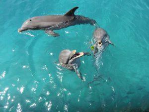 Hravé delfíny, foto: G. Murín