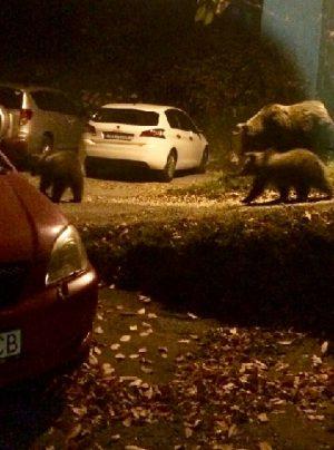 Medvede pri krčme